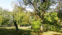Plant, Vegetation, Tree, Forest, Land, Woodland, Tree Trunk, Grove, Grass, Jungle, Oak, Rainforest, Lawn, Park, Yard
