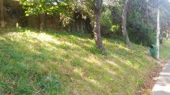 Plant, Tree, Vegetation, Tree Trunk, Grass, Land, Yard, Forest, Woodland, Ground, Field, Zoo, Garden, Arbour, Grassland
