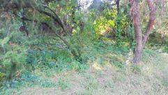 Vegetation, Plant, Tree, Bush, Land, Forest, Woodland, Conifer, Rainforest, Grove, Jungle, Tree Trunk, Grass, Yard, Wildlife