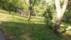 Plant, Tree, Vegetation, Grass, Tree Trunk, Land, Woodland, Forest, Oak, Grove, Field, Lawn, Park, Yard, Grassland