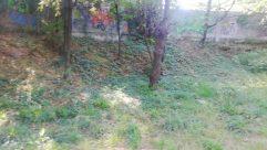 Yard, Plant, Grass, Vegetation, Tree, Path, Land, Backyard, Woodland, Forest, Ground, Trail, Tree Trunk, Grove, Field
