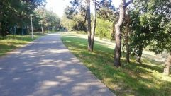 Path, Plant, Vegetation, Tree, Grass, Trail, Woodland, Forest, Land, Grove, Pavement, Sidewalk, Road, Tree Trunk, Park