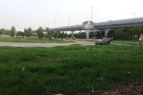 Road, Grass, Freeway, Bridge, Tree, Park, Overpass