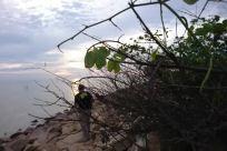 Water, Rock, Vegetation, Plant, Landscape, Panoramic, Shoreline, Ocean, Sea, Sky, Tree, Coast, Land, Promontory, Bird