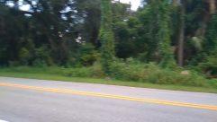 Car, Vehicle, Automobile, Road, Path, Sports Car, Freeway, Highway, Wheel, Plant, Vegetation, Coupe, Tire, City, Building