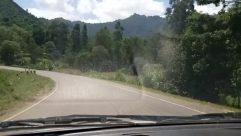 Road, Cow, Cattle, Highway, Freeway, Vegetation, Plant, Vehicle, Windshield, Tree, Truck, Bush, Bus, Train, Grass