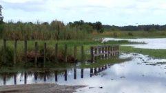 Land, Water, Swamp, Bog, Marsh, Ground, Waterfront, Grass, Plant, Dock, Pier, Port, Bird, Soil, Lawn