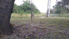Ground, Plant, Tree, Grass, Land, Yard, Vegetation, Woodland, Forest, Tree Trunk, Grove, Abies, Fir, Bird, Field