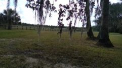 Tree, Plant, Ground, Tree Trunk, Vegetation, Field, Grassland, Land, Savanna, Grass, Woodland, Forest, Countryside, Grove, Palm Tree