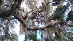 Skin, Plant, Tree, Tree Trunk, Vegetation, Nest, Bird Nest, Palm Tree, Arecaceae, Conifer, Tattoo, Agavaceae, Face, Bird, Pine