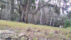 Plant, Tree, Vegetation, Land, Tree Trunk, Forest, Woodland, Ground, Grove, Garden, Arbour, Grass, Jungle, Yard, Palm Tree