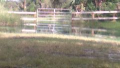 Land, Field, Water, Fence, Yard, Horse, Grassland, Countryside, Grass, Plant, Farm, Rural, Pasture, Andalusian Horse, Ranch
