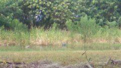 Skin, Plant, Ground, Tree, Vegetation, Wildlife, Deer, Hand, Elk, Arm, Reptile, Wrist, Snake, Bird, Rock Python