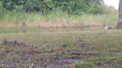 Footwear, Grass, Plant, Shoe, Ground, Pants, Shorts, Coat, Wildlife, Land, Vegetation, Sandal, Female, Bush, Deer