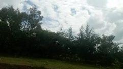 Vegetation, Plant, Tree, Woodland, Land, Forest, Rainforest, Grove, Jungle, Weather, Abies, Fir, Conifer, Pine, Grass