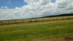 Weather, Field, Grassland, Grass, Plant, Land, Cloud, Sky, Cumulus, Vegetation, Vehicle, Countryside, Tree, Train, Van