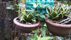 Potted Plant, Jar, Vase, Pottery, Plant, Aloe, Planter, Leaf, Herbs, Herbal, Blossom, Flower, Pot, Yard, Vegetation