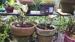 Plant, Potted Plant, Vase, Jar, Pottery, Planter, Flower, Blossom, Garden, Herbs, Soil, Reptile, Snake, Herbal, Leaf