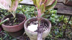 Plant, Potted Plant, Vase, Jar, Pottery, Soil, Planter, Leaf, Herbs, Herbal, Bird, Food, Vegetable, Tree, Sprout