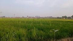 Field, Grassland, Plant, Vegetation, Countryside, Paddy Field, Land, Farm, Rural, Grass, Agriculture, Building, Shelter, Pasture, Meadow