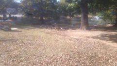 Plant, Tree, Vegetation, Bird, Ground, Grass, Land, Forest, Woodland, Grove, Tree Trunk, Wildlife, Deer, Lawn, Park