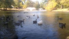Water, Bird, Goose, Waterfowl, Flare, Light, Duck, Vehicle, Mallard, Plant, Swan, Boat, Grass, Sea Life, Fountain
