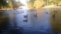 Water, Bird, Plant, Vegetation, Waterfowl, Goose, Duck, Tree, Swan, Grass, Forest, Land, Grove, Woodland, Mallard