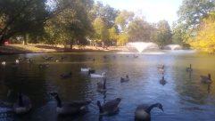 Bird, Water, Goose, Waterfowl, Swan, Boat, Vehicle, Duck, Penguin, Plant, Sea Life, Tree, Dolphin, Fountain, Grass