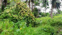 Plant, Vegetation, Jar, Vase, Pottery, Potted Plant, Tree, Land, Jungle, Rainforest, Bush, Herbs, Planter, Yard, Woodland