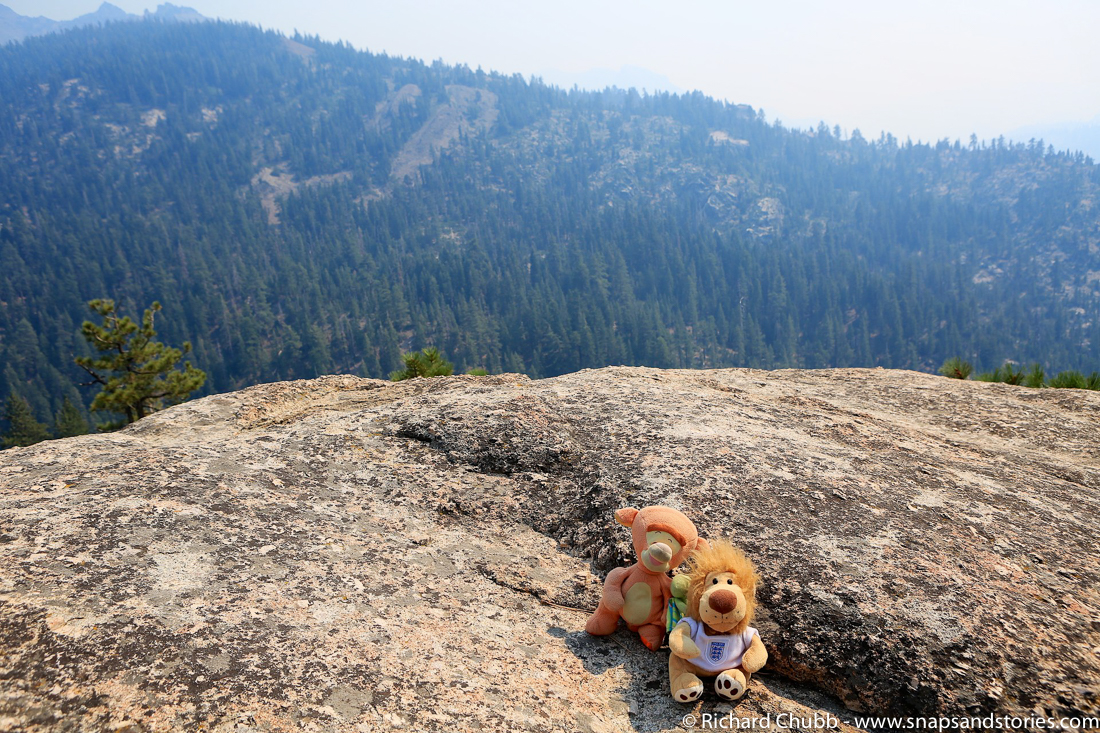 Overlooking Stanislaus Forest