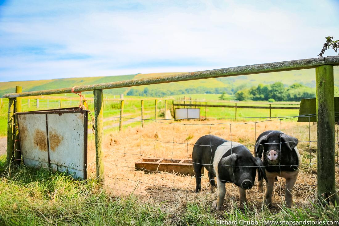 Glamping-at-Knaveswell-Farm-1035