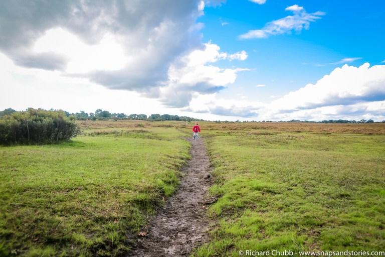 kings-hat-walk-new-forest-walks-1020