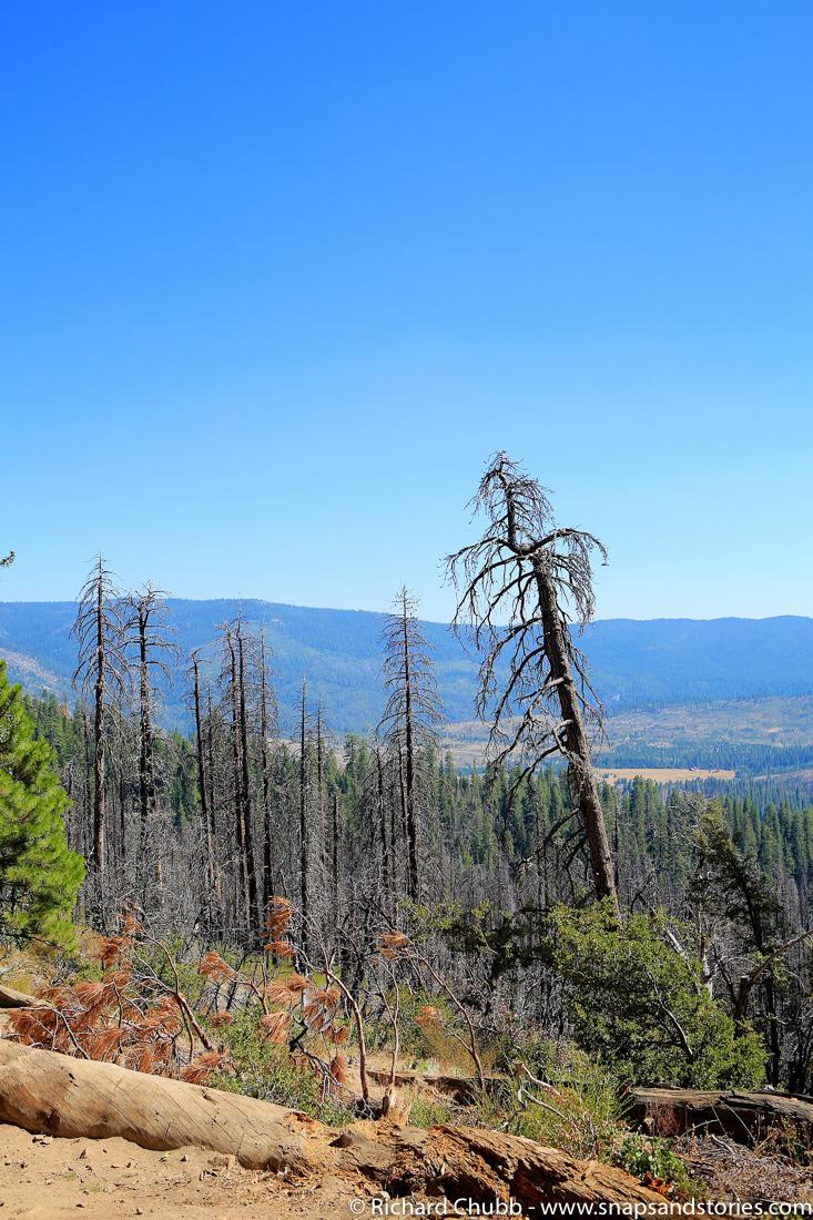 Yosemite Rim Fire 2013
