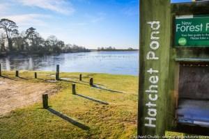 Hatchet Pond New Forest Walk