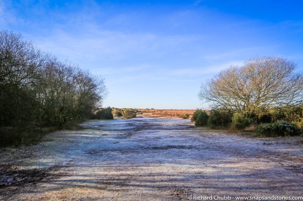 hatchet-pond-new-forest-walk-1003