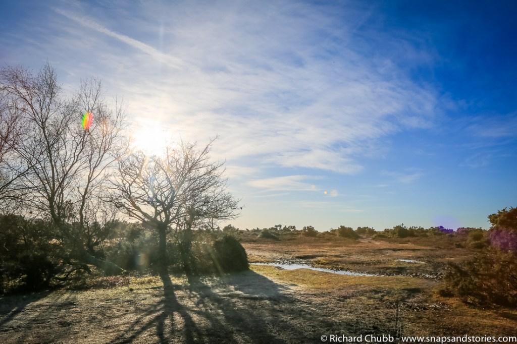hatchet-pond-new-forest-walk-1004