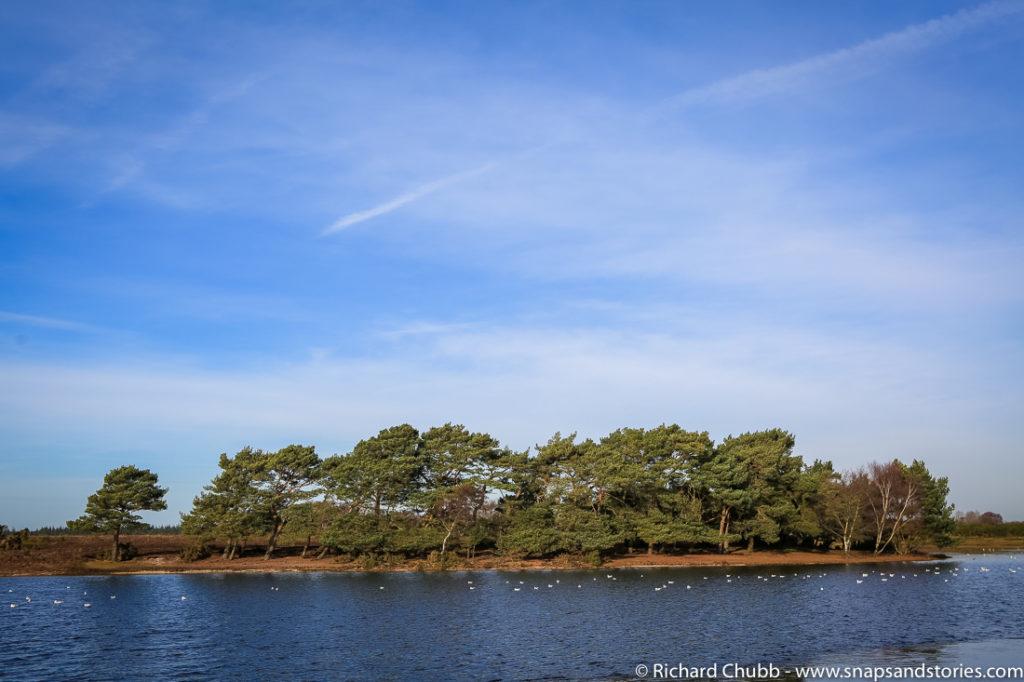 hatchet-pond-new-forest-walk-1022