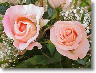A silk rose and a real rose.