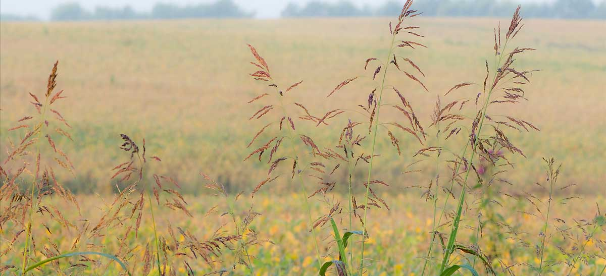 Grasses in the field