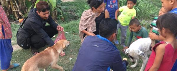 Feeding and Vaccinating Street Dogs