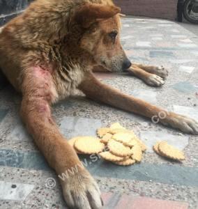 treating stray dogs