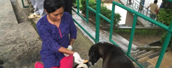 Rabies Vaccination Series: Swyambhunath