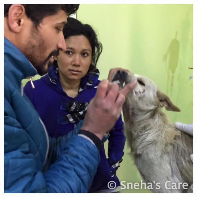 shena care