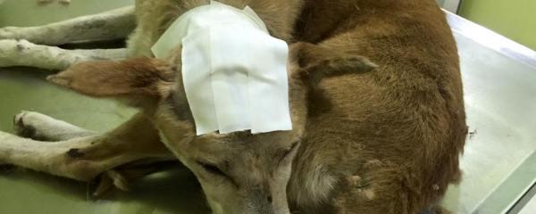 Hammering the Dog Head : Inhumane Act :(