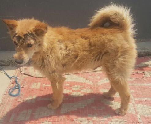 street dog nepal