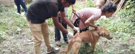 Rabies Vaccination Continues