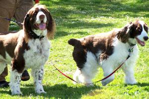 Dog Walking Ballard, Pet Sitting Ballard, Sniff Seattle Dog Walkers
