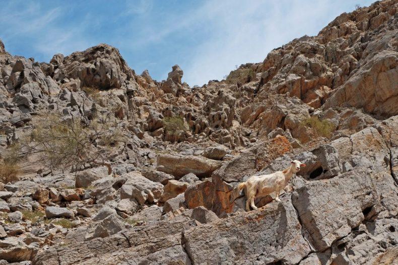 randonnée Oman