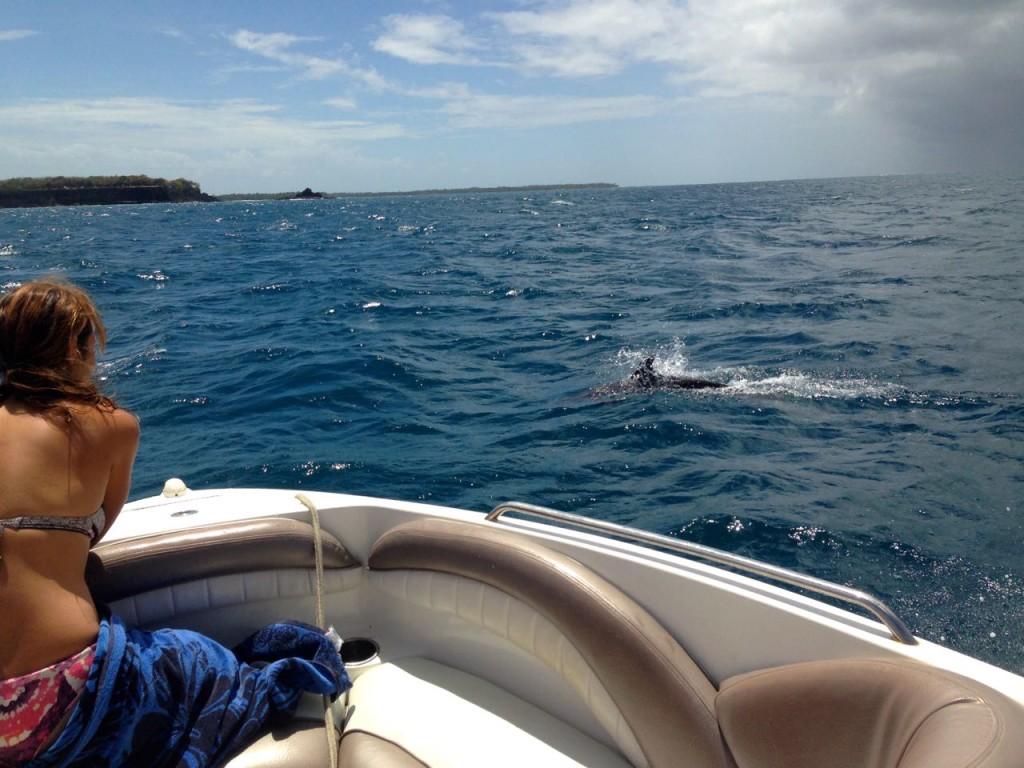 Dolphins on Snorkeltobago