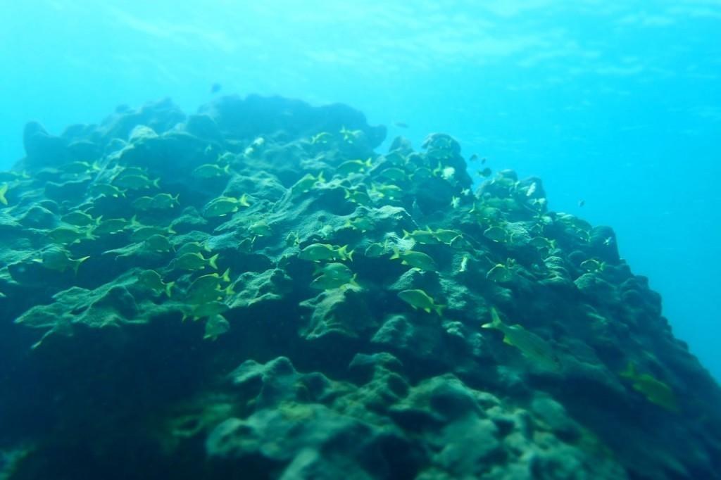 Tobago Reef